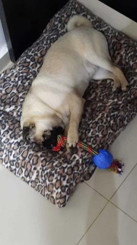Cadelinha Pug
