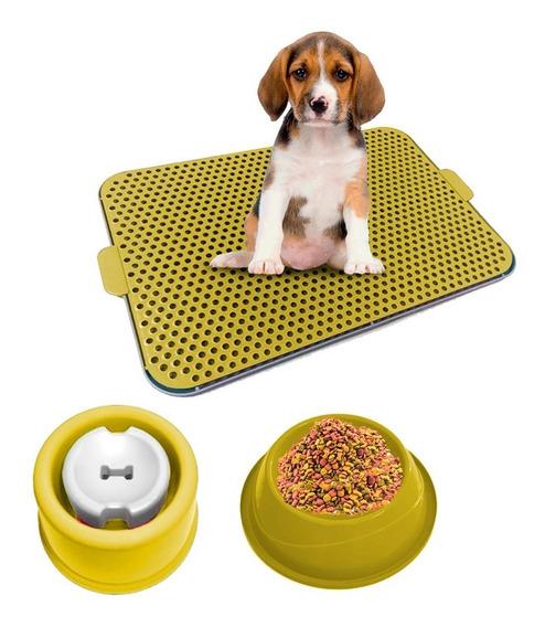 Kit Dog Xixi Dog Bebedouro Pelo Longo Comedouro Amarelo