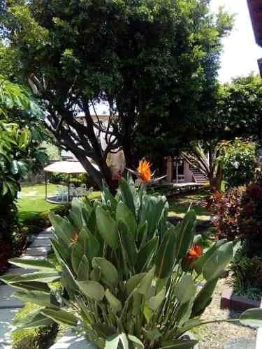 Casa En Renta Acacias, Lomas De Cuernavaca