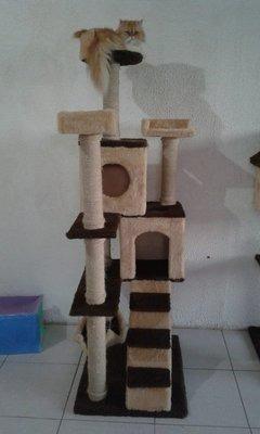 Arranhador Manu