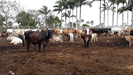 Rancho Ganadero Y Agrícola En El Oriente De Yucatán