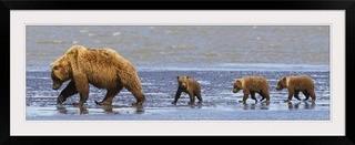 Greatbigcanvas Brown Bear Cerda Y Sus Tres Cachorros Camina