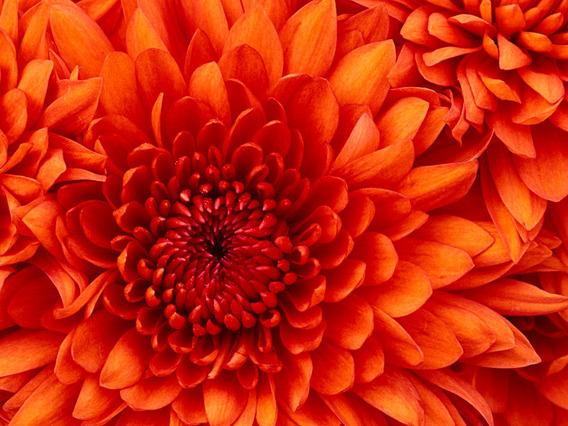 Lapis Em Forma De Flor