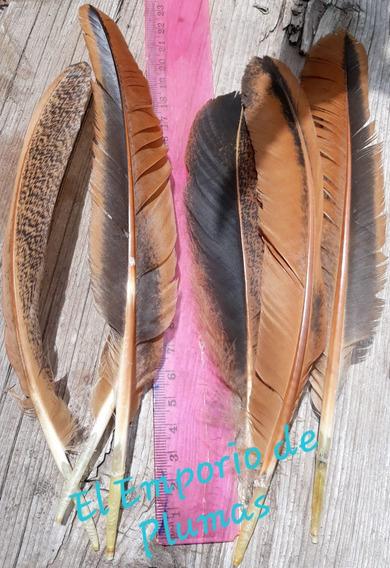 Plumas Naturales Canutos Medianos De Diferentes Colores