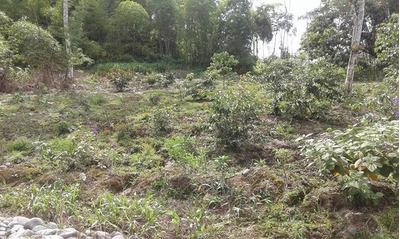Terreno Rural En Puyo Pastaza.