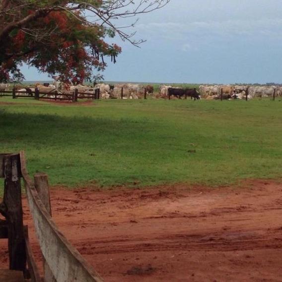 Fazenda Para Venda Em Naviraí, Centro - 1086
