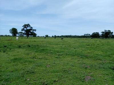 Fazenda A Venda Em Terenos - Ms (pecuária) - 1001