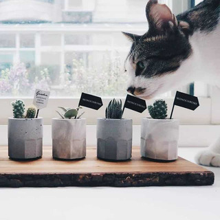 Mini Molde De Silicona Para Macetas De Concreto Suculentas