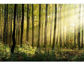 Fundo Fotográfico Tecido Newborn Floresta 2,6x1,7m - Ffj-67