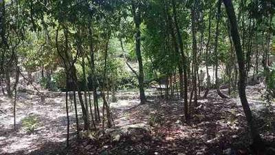 Terreno En Venta Con Cenote Ideal Desarrolladores En El Sur De Cancun