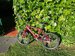 Bicicleta Mountain Bike Dolphin