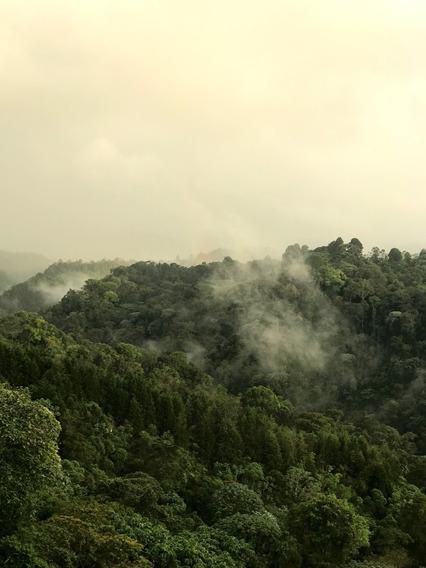 Venta Lote/terreno 19.000 M2 Filandia Quindio