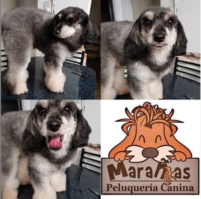 Peluquería Canina A Domicilio (consulte Siempre La Zona)