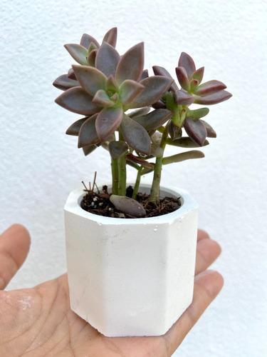 Imagen 1 de 4 de Macetas Mini Cemento Suculentas Cactus Recuerdo 10pza