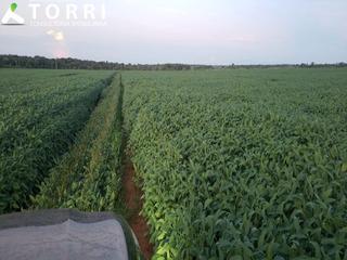 Fazenda Região De Canarana - Fa00040 - 67817222
