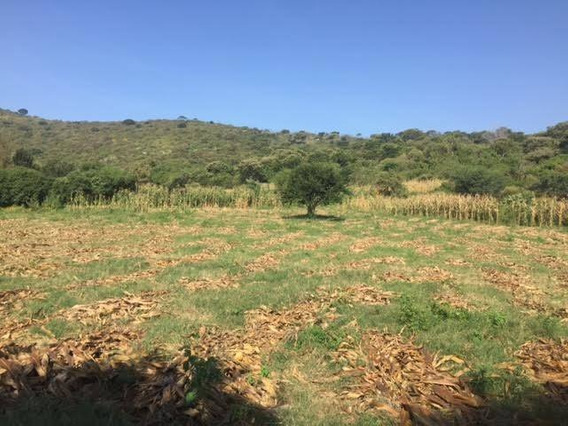 Terreno Ideal Para Desarrollar Habitacional En Predio La Peña Amarilla