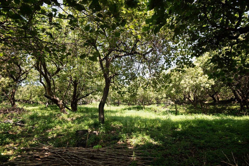 Imagen 1 de 4 de Terreno Tepoztlan