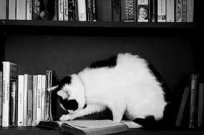 20 Livros Infanto Juvenis Para Sebos E Leiitores Em Geral