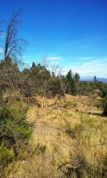 Parcela San Pedro De Melipilla 4 Hectáreas Con Eucaliptus