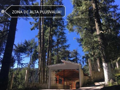 Imagen 1 de 12 de Terreno En Venta Dentro De Impresionante Bosque, Tenemos Lotes Escriturados!