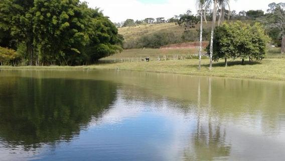 Ótimo Sítio Com 70.000 M2 Em Baependi Sul E Minas - Toda Estrutura Para Gado E Criação De Cogumelo - Lago -03 Casas. - 127