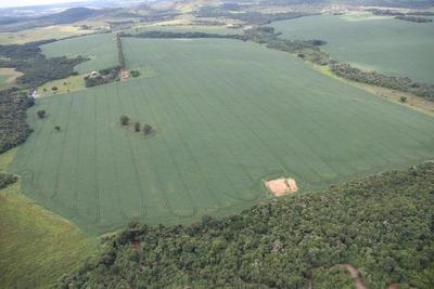 Fazenda Em Silvânia-go Com 12 Anos De Plantação De Soja