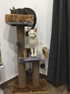 Rascadores Gimnasio Para Gatos (eden Gatuno) Doble Descanso