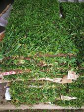 Venta Y Instalación De Grass Americano, Sustratos,plantas,et