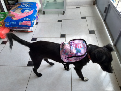 Mochila Para Perro, Para Pasear