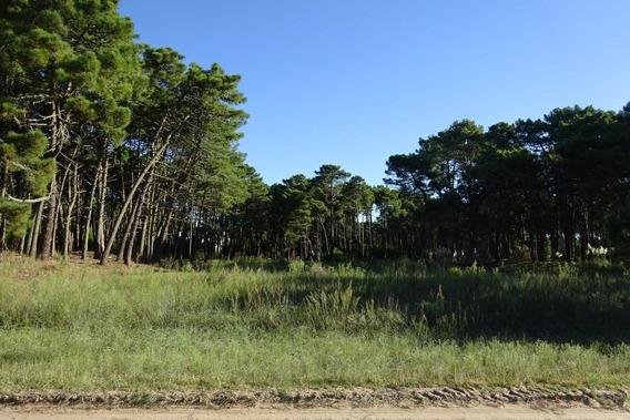 1490 - Lote En Venta - Pinamar, Zona Alamos