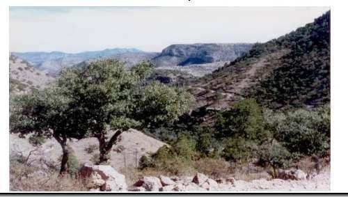Imagen 1 de 5 de Se Vende Terreno Rsutico, Nonoava