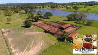 Fazenda A Venda De 656 Alqueirões Em Sandolândia-to(pecuária E Agricultura) - 559