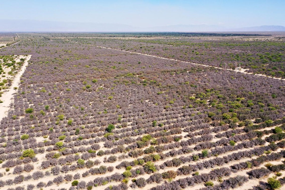 Campos En Venta - 1.500 Ha En Aimogasta, Provincia De La Rioja - Olivos De 10 Años, Equipamiento Completo
