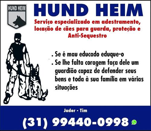 Imagem 1 de 1 de Hund Heim Adestramento E Locação De Cães Pra Guarda .