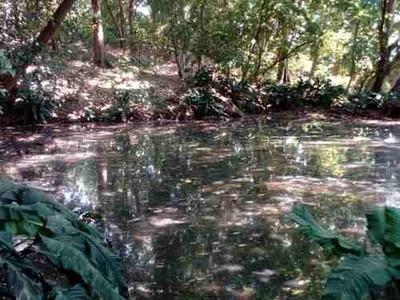 En Venta 10 Hectáreas De Terreno Agrícola Cerca Del Río Grijalva