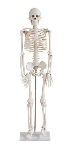 Esqueleto De Humano 85cm Ms