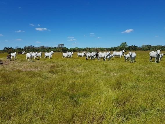 Fazenda A Venda Em Formoso Do Araguaia - To (pecuária) - 1184