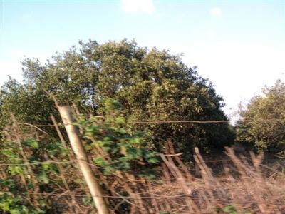 Fazenda Rural À Venda, Conchal-sp - Fa0082. - Fa0082