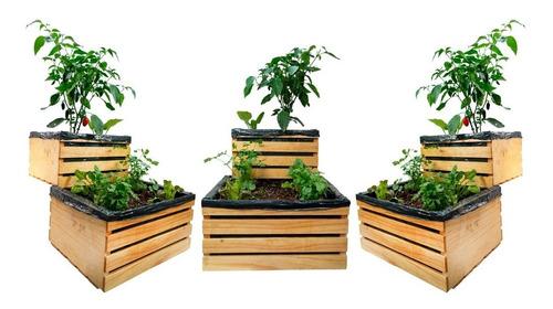 Cultivo Inicial De Huerto Orgánico