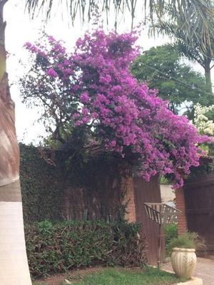 Chácara Com 3 Dormitórios À Venda, 1580 M² Por R$ 700.000 - Santa Inês - Caieiras/sp - Ch0004