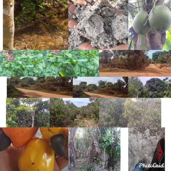 Terreno Com Água Plantação É Areia E Mata Com Madeira