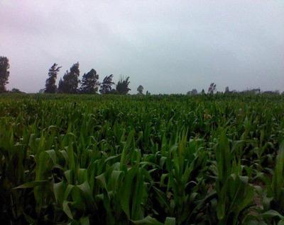 Venta De Terreno Aucallama Huaral