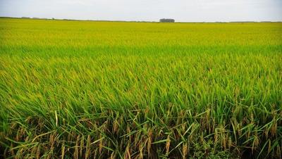 Fazenda Com 900 Hectares Para Arroz, Soja E Pecuária.