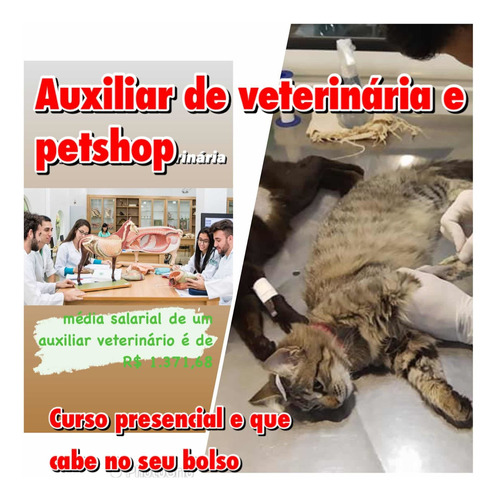 Imagem 1 de 1 de Curso De Auxiliar De Veterinária E Petshop