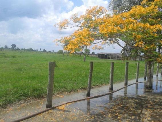 Fazenda Para Venda Em Porto Murtinho, Centro - 1021