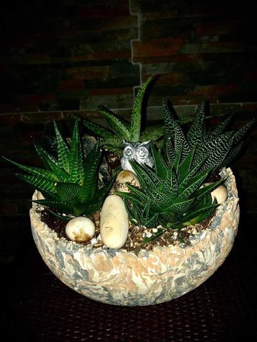 Imagen 1 de 11 de Plantas Suculentas
