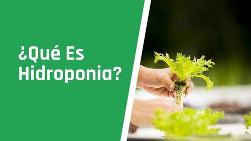 Curso De Hidroponia +suculentas Cactus+ Paisajismo Y Más