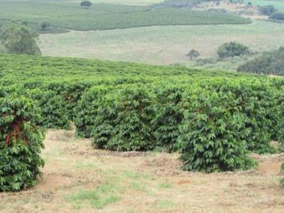 Fazenda Com 280 Ha Em Guaxupé Mg - Com Toda Estrutura Para Café -e Gado -média 2.000 S Café Ano -casa Sede - Casa Colono - Oficina- Salão De Festas- Toda Estrutura Lazer . - 2465