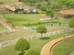 Fazenda Haras Maravilhosa - 249 Ha - Região Conceição Do Pará (mg) - Codigo: Fa0059 - Fa0059