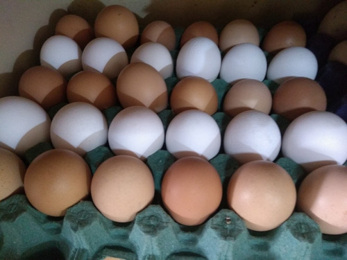 Imagen 1 de 9 de Huevos Fértiles Para Incubar ($750 X Maple)
